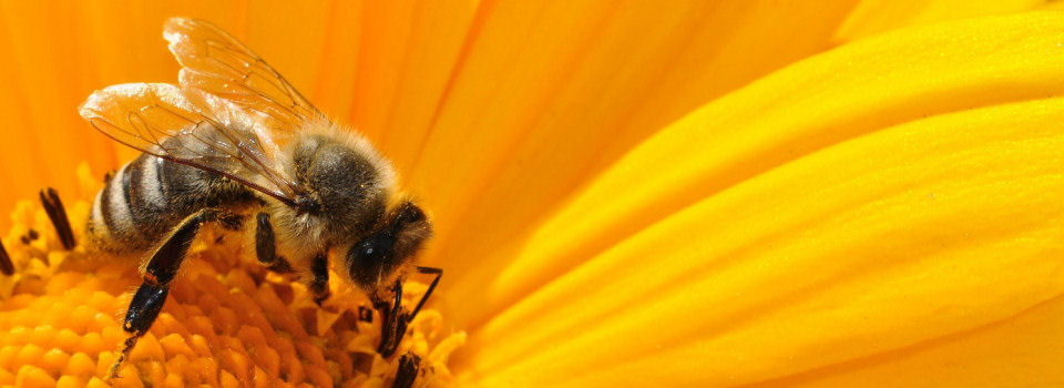 Swansea and District Beekeepers' Society